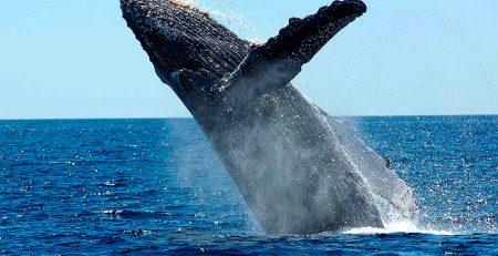 Cali Whale Watching