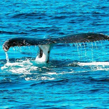 Avistamiento de Ballenas en Cali Colombia