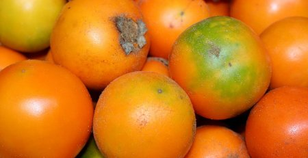 tour de frutas en cali